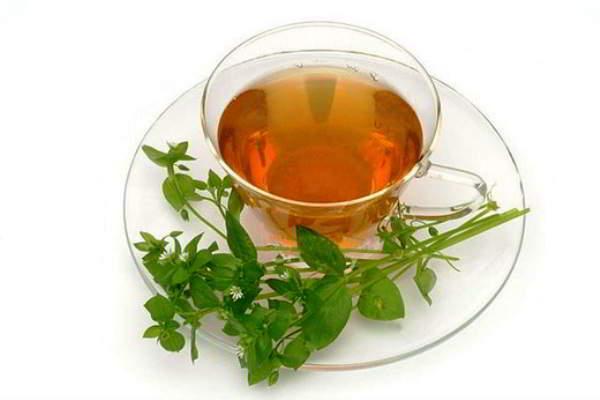 мокрица трава лечебные свойства в косметологии