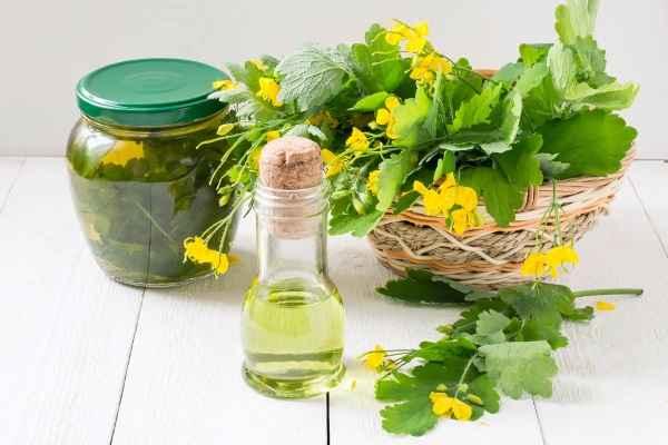 чистотел лечебные свойства и противопоказания рецепты