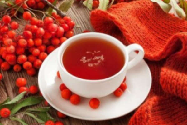 рябина красная полезные и лечебные свойства