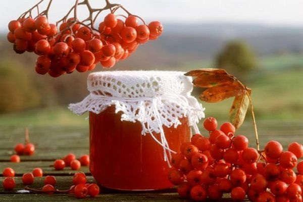 рябина красная полезные свойства и противопоказания рецепты