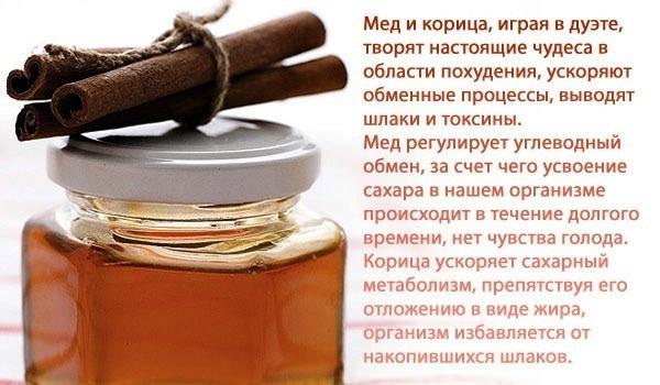 корица и мед полезные свойства и противопоказания