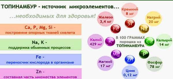 полезные свойства и состав топинамбура