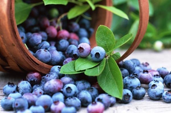 ягода черника полезные свойства