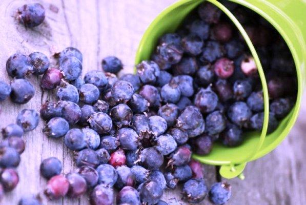 ирга ягода полезные свойства