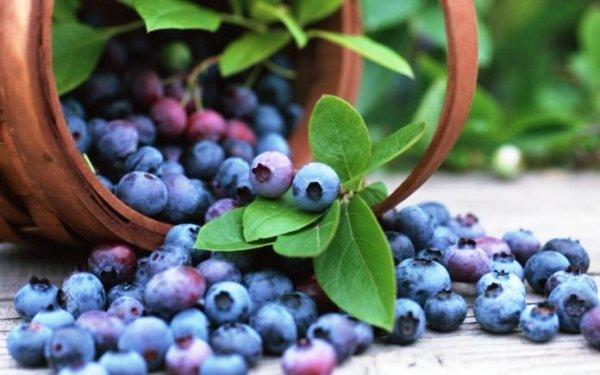 ягода черника полезные свойства и противопоказания