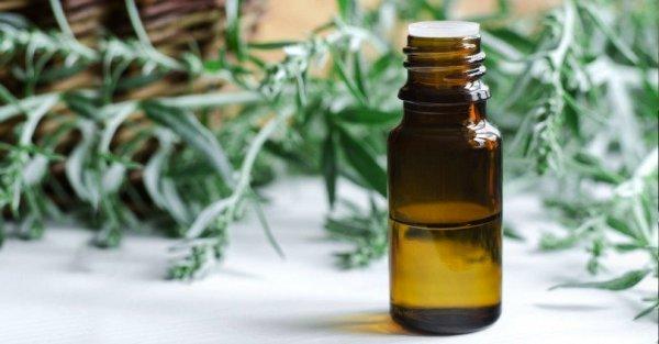 polyn-gorkaya-lechebnye-svojstva-i-protivopokazaniya