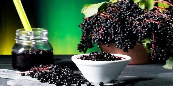бузина черная рецепты от рака