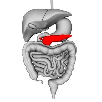 где находиться поджелудочная железа в организме