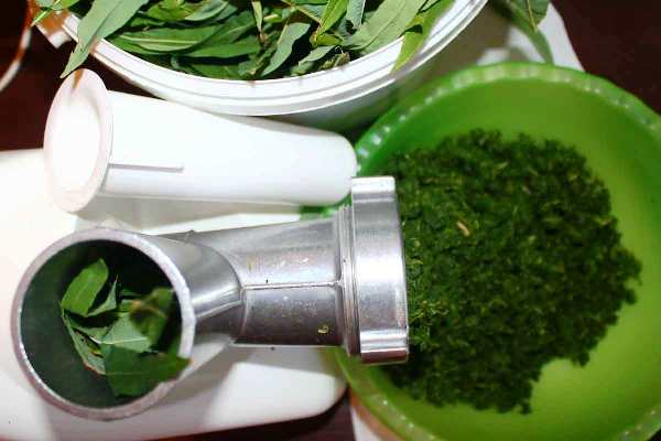 листья иван-чая перекручивают на мясорубке