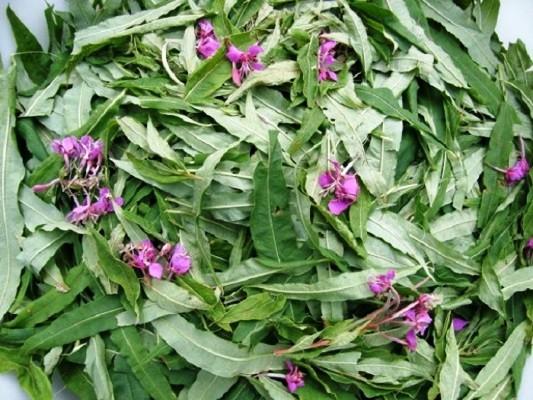 листья и цветки иван-чая процесс вяления