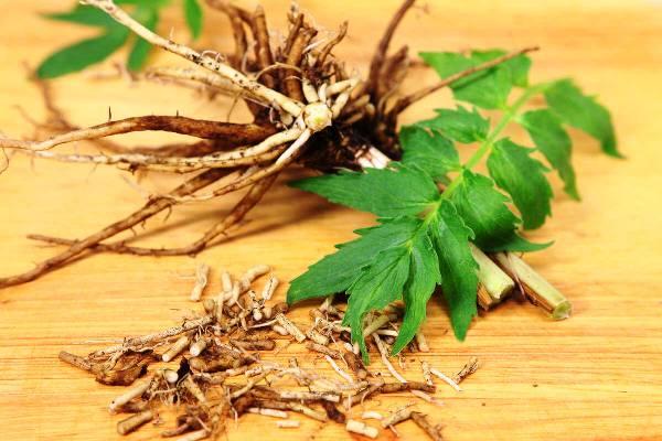измельченный корень валерианы