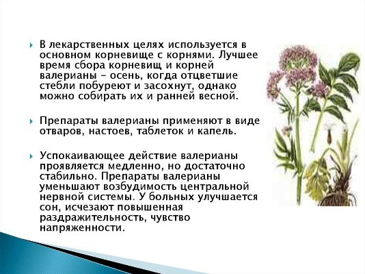 валериана лекарственная лечебные свойства