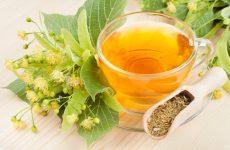 Липа: лечебные свойства и противопоказания, рецепты