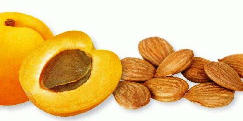 Польза и вред абрикосовых косточек для здоровья, калорийность, лечебные свойства