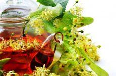 Липовый чай, полезные свойства, противопоказания, лечебные рецепты