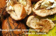 Лечебные свойства перегородок грецких орехов