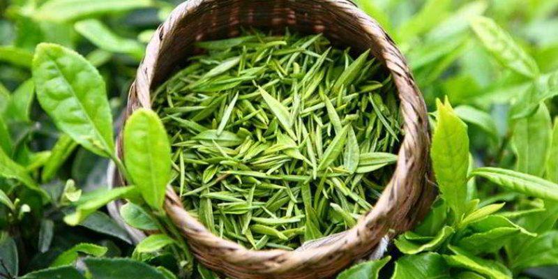 Иван-чай: 3 способа заготовки на зиму в домашних условиях