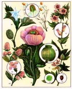 лекарственные растения свойства