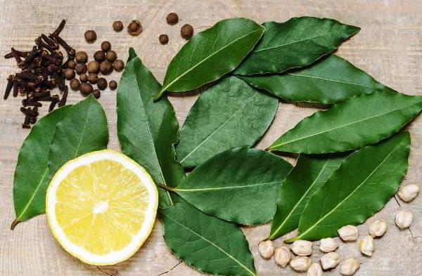 Лечебные свойства лаврового листа для суставов