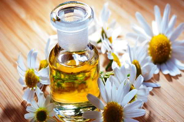 масло ромашки свойства и применение