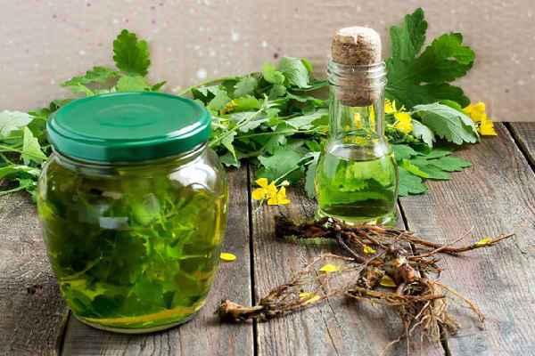 чистотел лечебные свойства и противопоказания