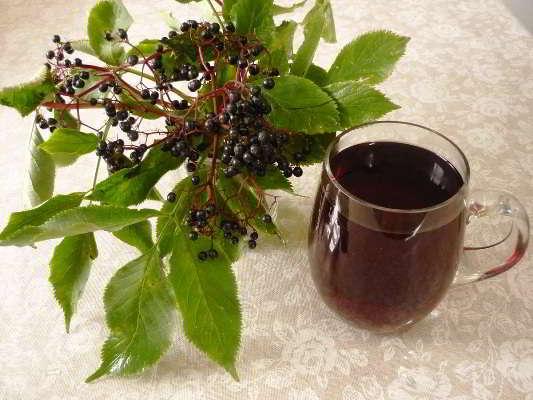 ягоды бузины черной лечебные свойства для лечения рака