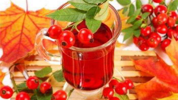 Красная рябина: лечебные и полезные свойства, народные рецепты для здоровья и красоты