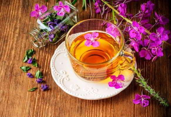 польза и вред иван чая для организма
