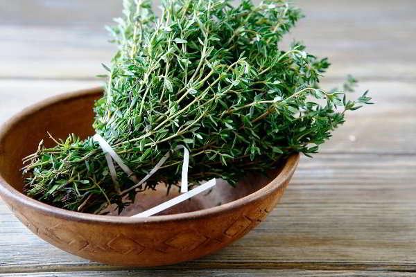 трава тимьяна ползучего