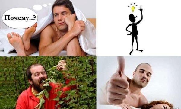 лечебные свойства крапивы для мужчин