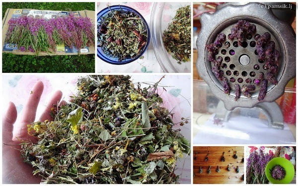 иван чай как собирать и сушить и делать чай