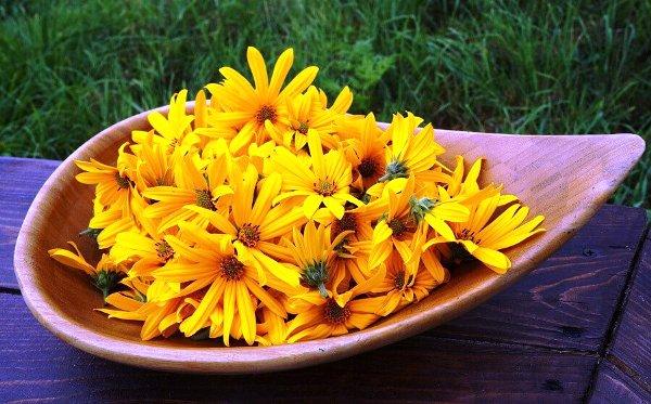 топинамбур полезные свойства и противопоказания рецепты