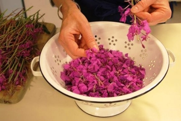как сушить цветки иван чая в домашних условиях