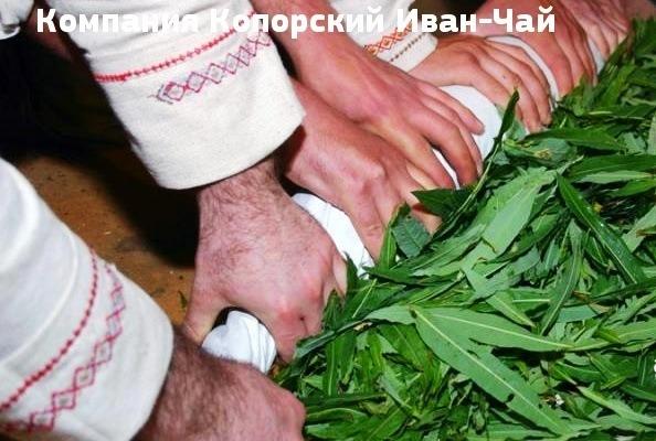 иван чай народные рецепты заготовки