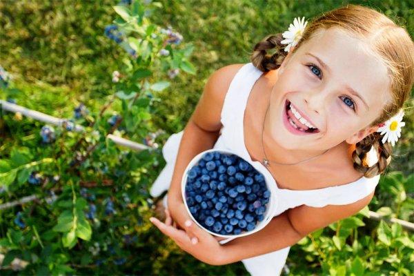 zhimolost-для детей польза