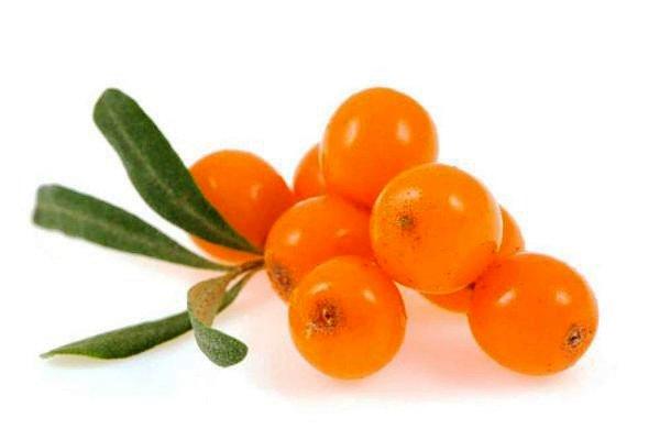 плоды облепихи