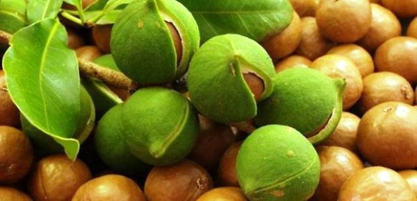орех макадамия польза и вред