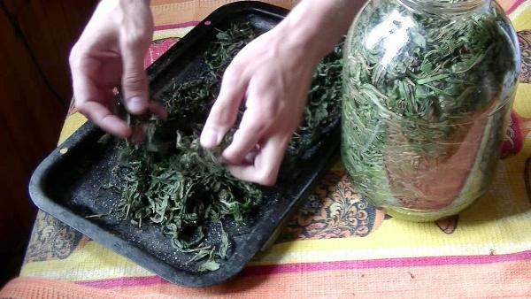 сушить чай-иван