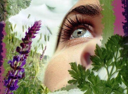 лечебные травы для глаз