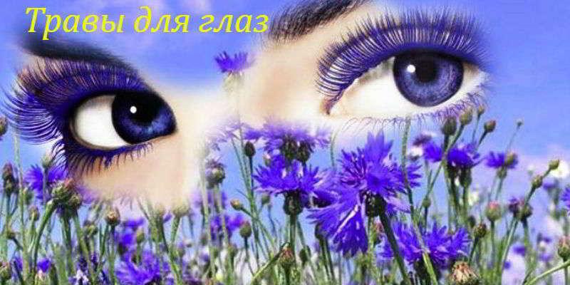 Травы для глаз: лечим воспаления, аллергию, катаракту и восстанавливаем зрение