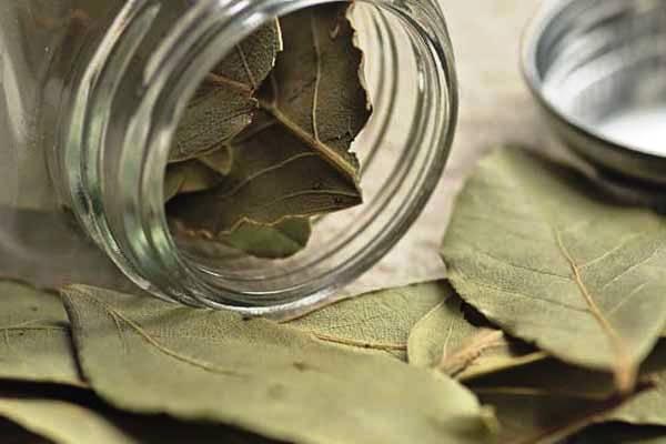 отвар лавровых листьев