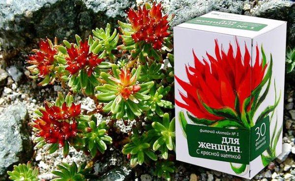 трава красная щетка в природе и аптечной упаковке