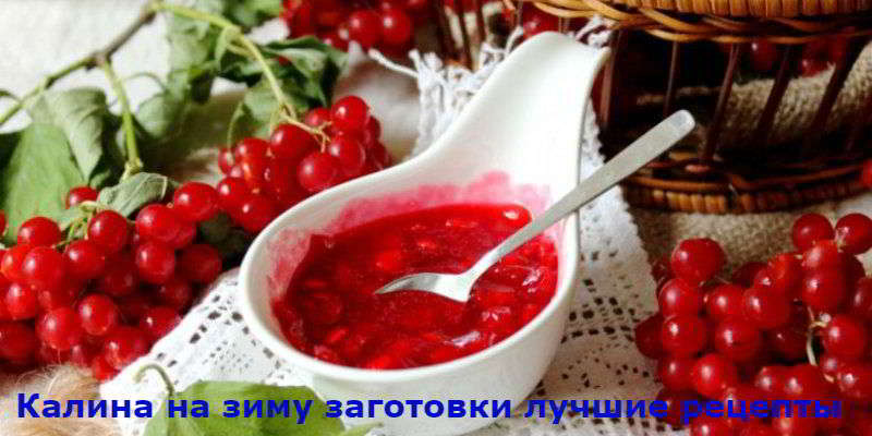 Лучшие рецепты заготовок из ягод калины на зиму