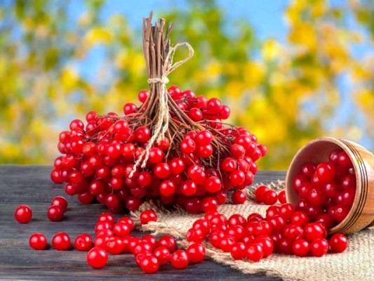калина ягода рецепты на зиму