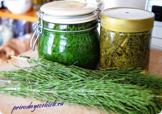 лечебные настои и настойки травы хвощ
