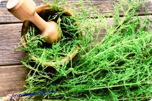 трава хвощ лечебные свойства противопоказания