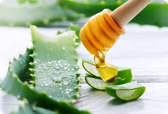 рецепт алоэ с медом для лечения желудка