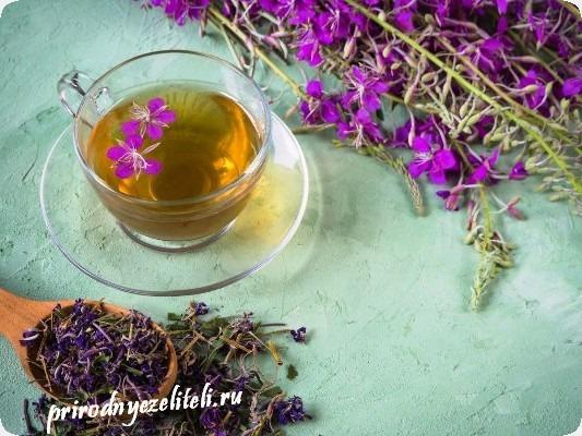 копорский чай из растения иван-чай