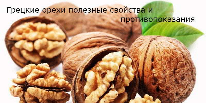 Грецкие орехи: полезные свойства и противопоказания