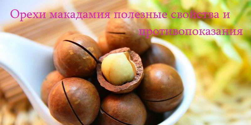 Орех макадамия полезные свойства и противопоказания для здоровья